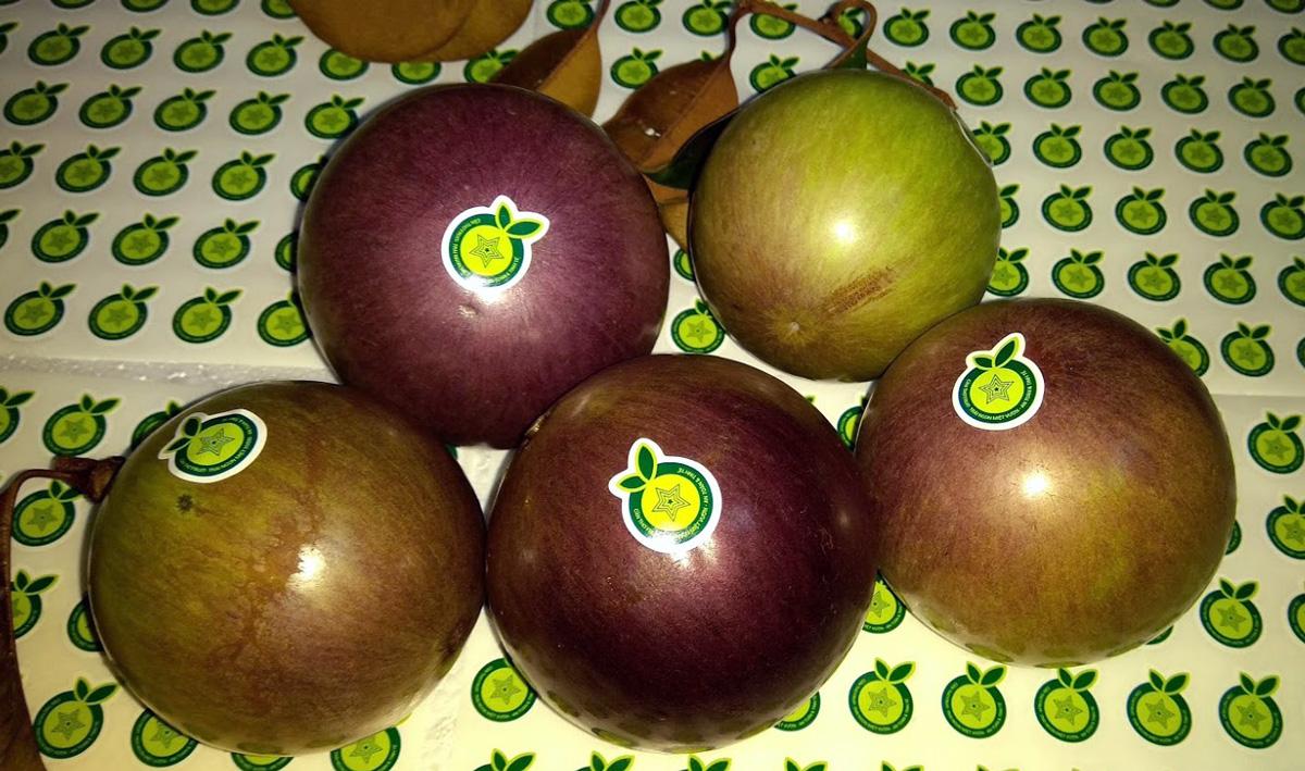 vu-sua-lo-ren-tim-can-tho-fruit